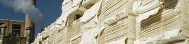 paperPulp384x90